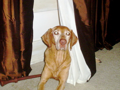 curtain snuggler