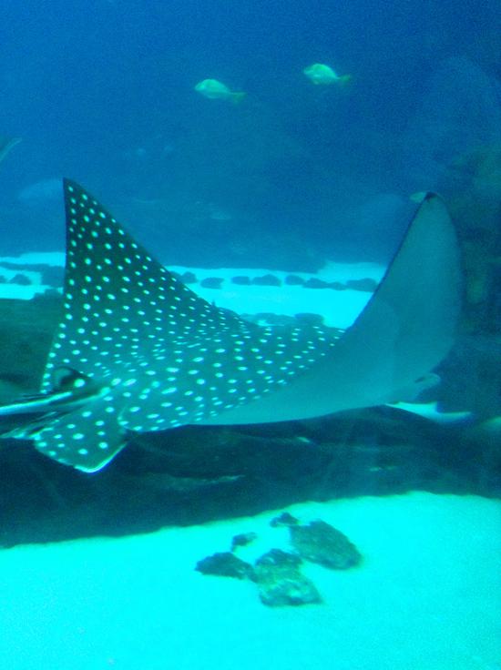 Georgia Aquarium Modfrugal
