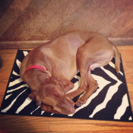 Otto & his Dollar General Rug